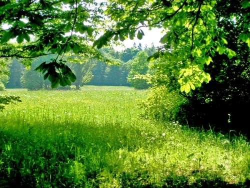 breathe in nature pic